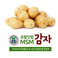 유황닷컴MSM감자 10Kg / 20Kg